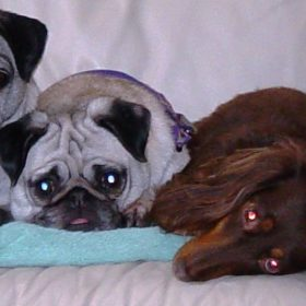 4-dogs-on-the-sofa