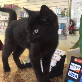 black kitten standing on counter at vets office. cat has yellow eyes and is looking off camera