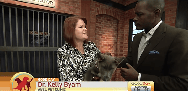 screenshot of Dr. Byam on Good Day tv show. Showing small grey dog to African american man in suit